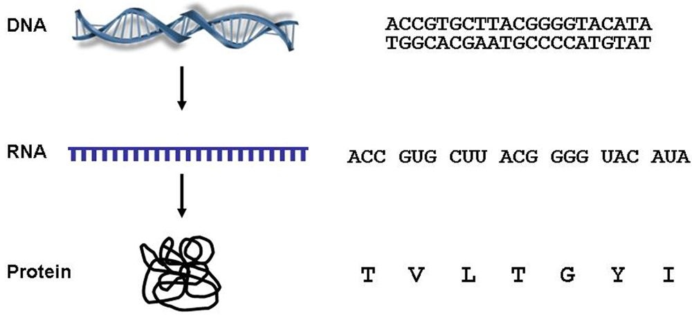 DNASequence