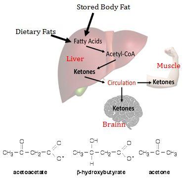 Ketone ester supplementation Update