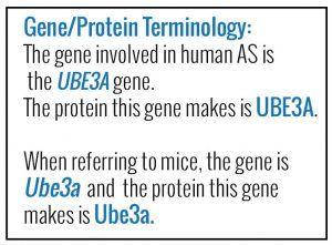 GeneProtein