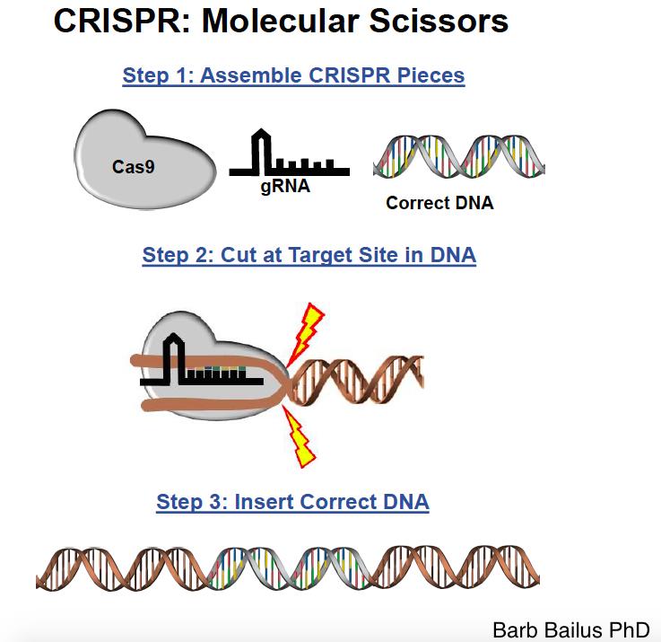 CRISPR1